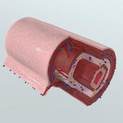現実的な消化管の解剖学 3d model