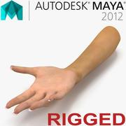 Vrouwelijke hand getuigd voor Maya 3d model