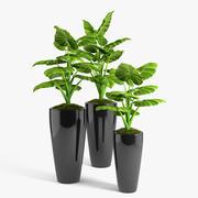 Philodendron Pflanzen gesetzt 3d model