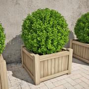 Boxwood 01 3d model