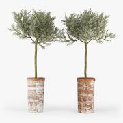 オリーブの木 3d model