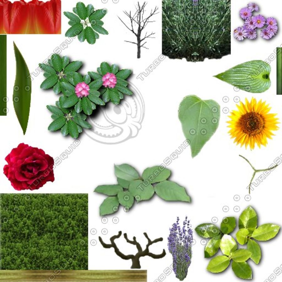 Fleurs et plantes de jardin royalty-free 3d model - Preview no. 10