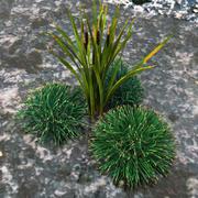 Arbusto de hierba modelo 3d