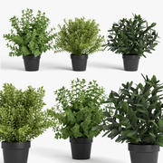 Pflanzen gesetzt 3d model