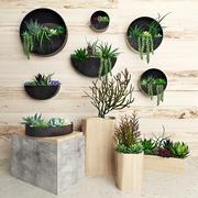 Rośliny na ścianie 3d model