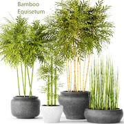 Bambusowe Drzewa 3d model