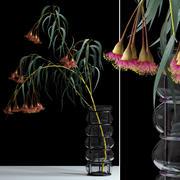 Eucalyptus bloeien 3d model