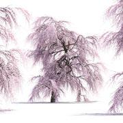 Дерево сакуры 3d model