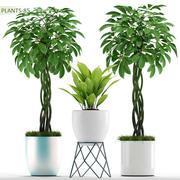 rośliny 85 3d model