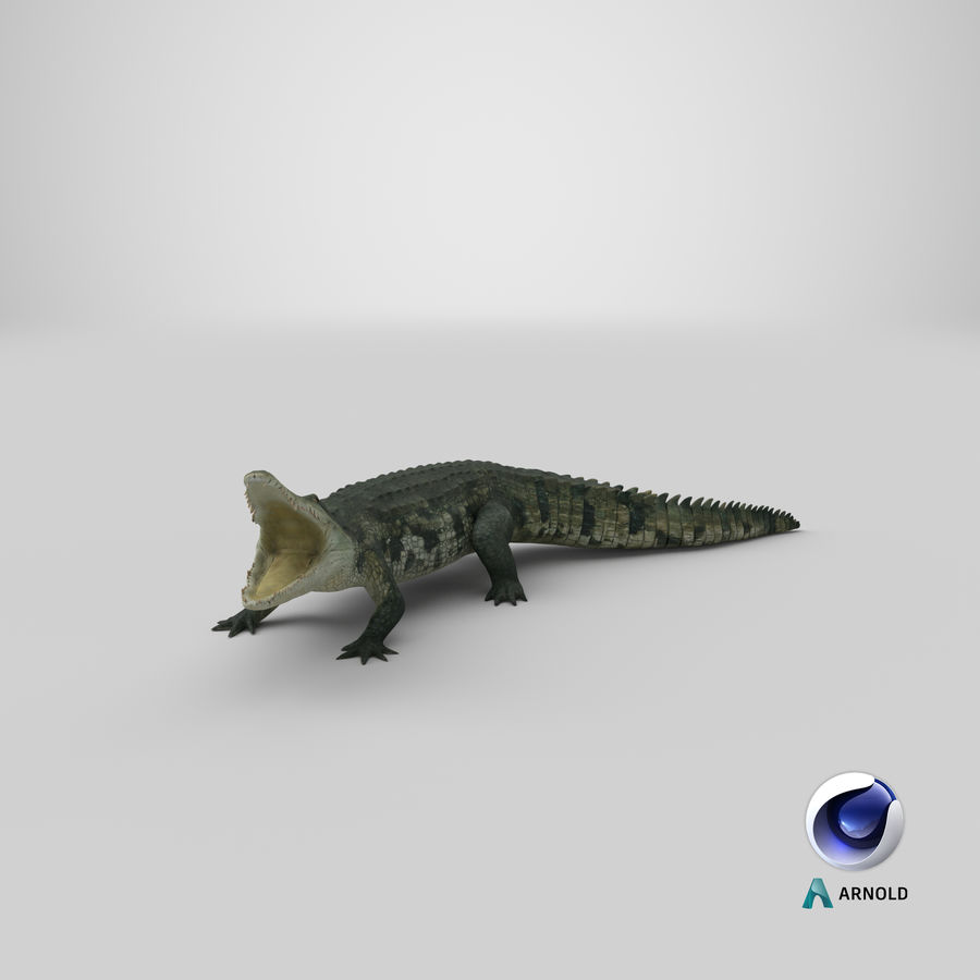 Crocodile Attacks Pose Modèle 3D royalty-free 3d model - Preview no. 21
