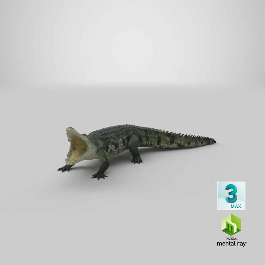 Crocodile Attacks Pose Modèle 3D royalty-free 3d model - Preview no. 25
