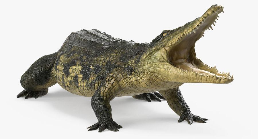 Crocodile Attacks Pose Modèle 3D royalty-free 3d model - Preview no. 4