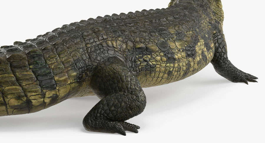 Crocodile Attacks Pose Modèle 3D royalty-free 3d model - Preview no. 6