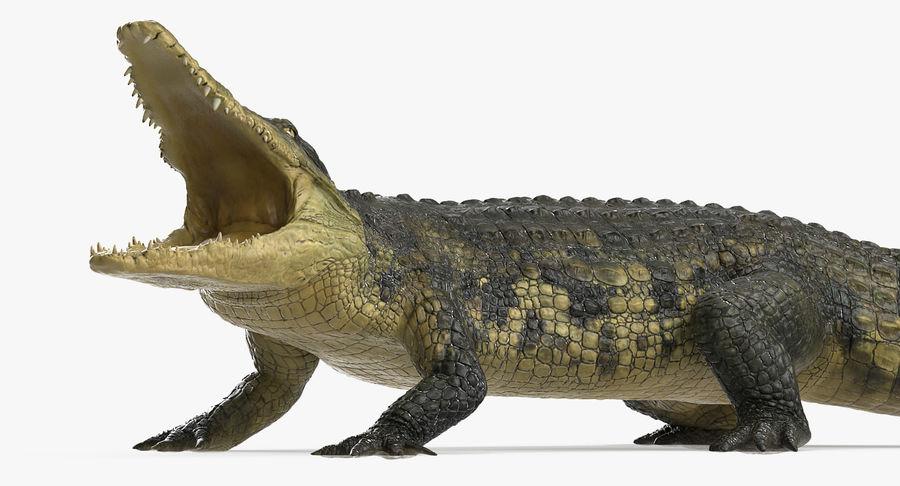 Crocodile Attacks Pose Modèle 3D royalty-free 3d model - Preview no. 5