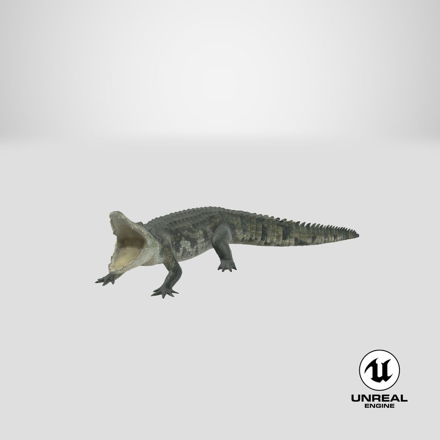 Crocodile Attacks Pose Modèle 3D royalty-free 3d model - Preview no. 23