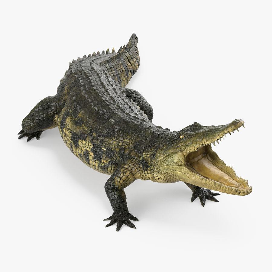 Crocodile Attacks Pose Modèle 3D royalty-free 3d model - Preview no. 1