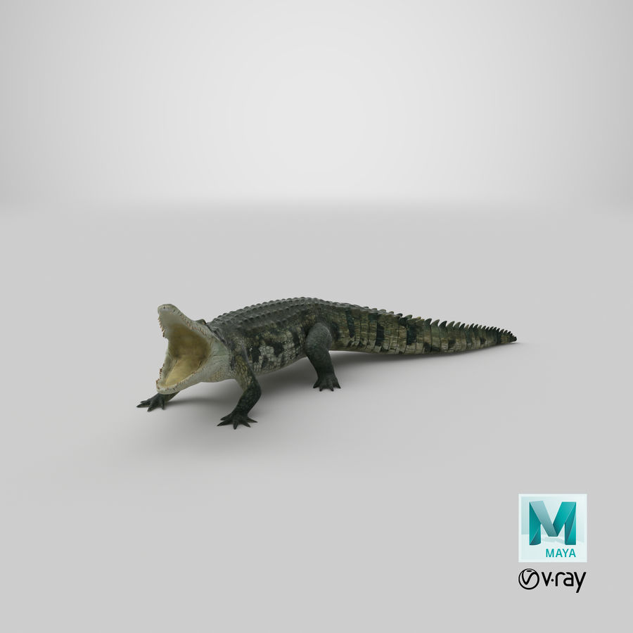 Crocodile Attacks Pose Modèle 3D royalty-free 3d model - Preview no. 29