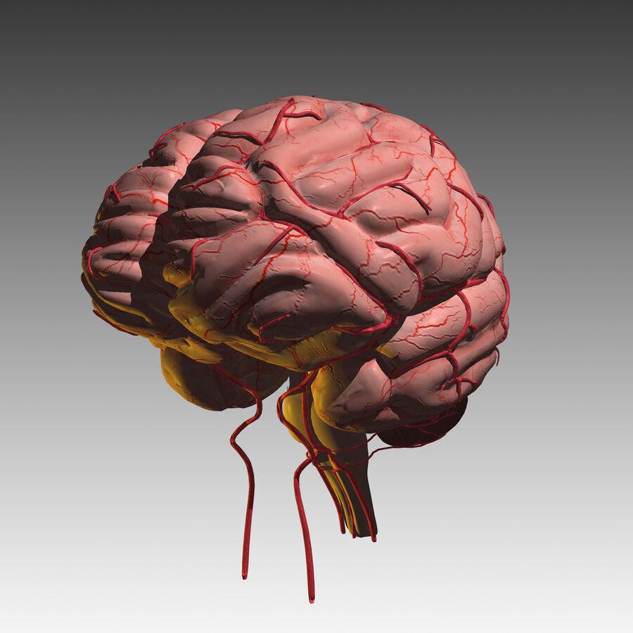 Mänsklig hjärna royalty-free 3d model - Preview no. 12