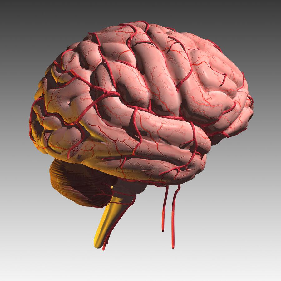 Mänsklig hjärna royalty-free 3d model - Preview no. 13