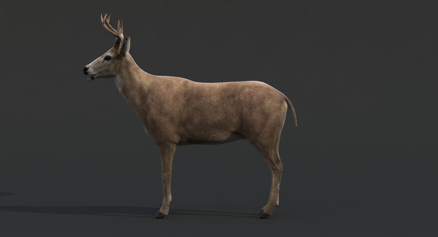 Hirsch royalty-free 3d model - Preview no. 10