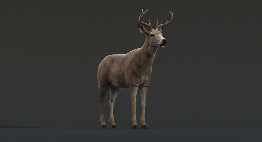 Hirsch royalty-free 3d model - Preview no. 8