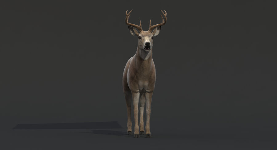 Hirsch royalty-free 3d model - Preview no. 6