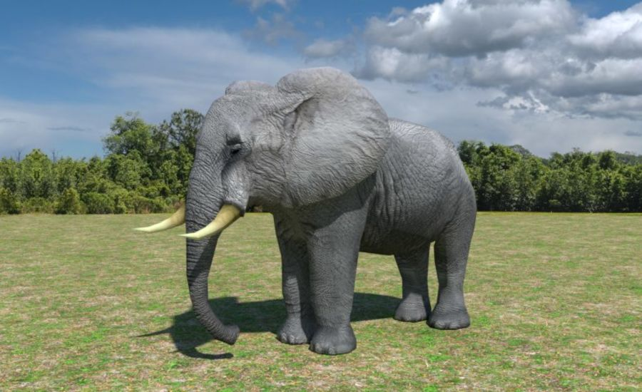 African Elephant Low Poly royalty-free 3d model - Preview no. 1