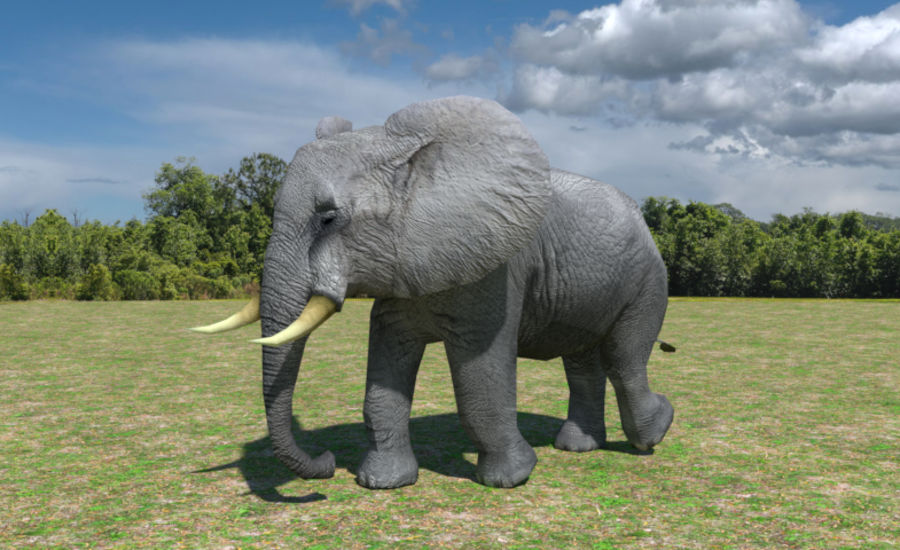African Elephant Low Poly royalty-free 3d model - Preview no. 2