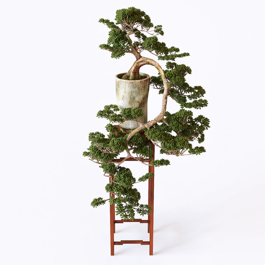 bonsaï royalty-free 3d model - Preview no. 6