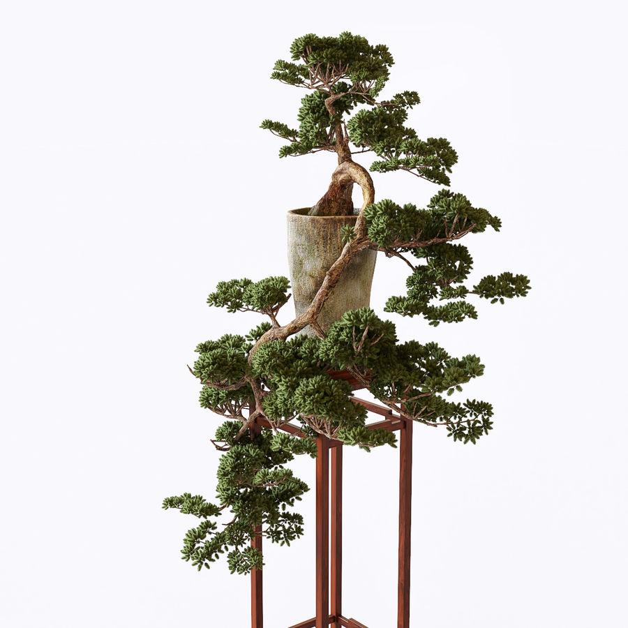 bonsaï royalty-free 3d model - Preview no. 4