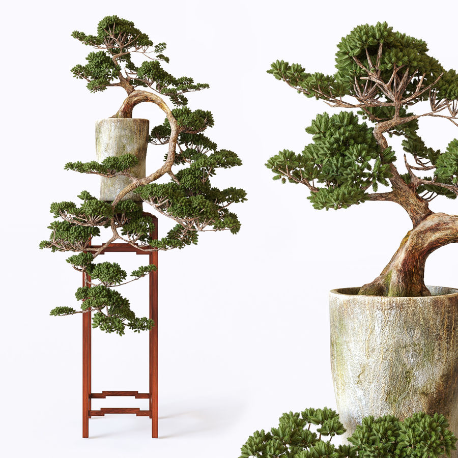 bonsaï royalty-free 3d model - Preview no. 1
