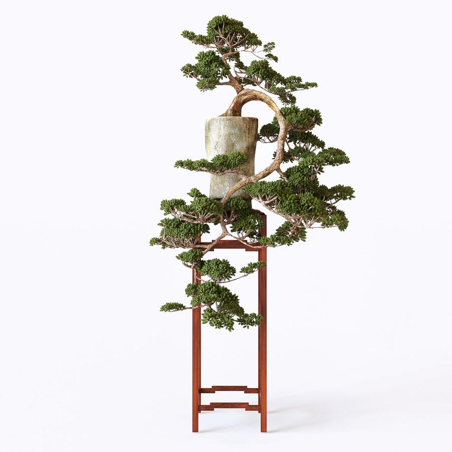 bonsaï royalty-free 3d model - Preview no. 2