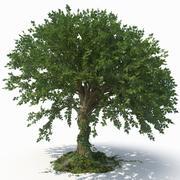 Árbol modelo 3d