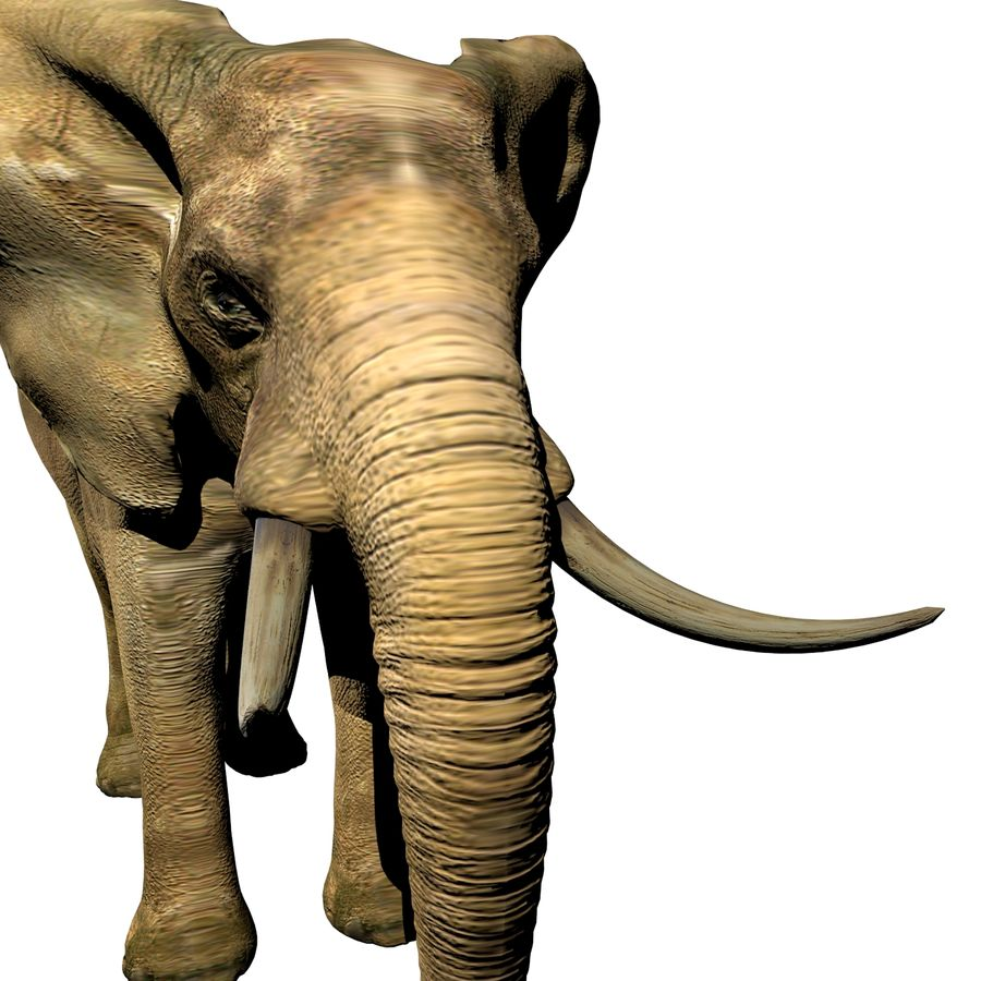 Elefante (africano) royalty-free 3d model - Preview no. 3