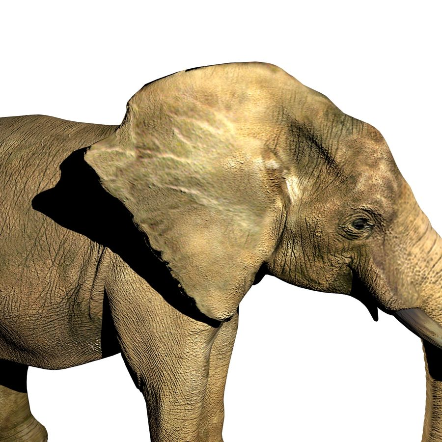 Elefante (africano) royalty-free 3d model - Preview no. 2