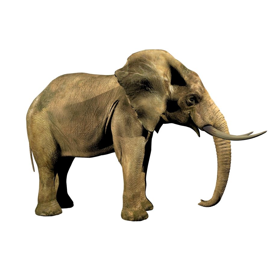 Elefante (africano) royalty-free 3d model - Preview no. 1