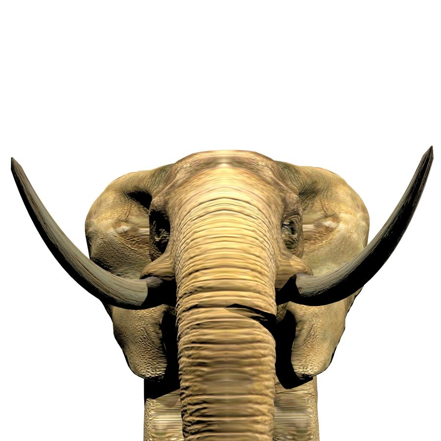 Elefante (africano) royalty-free 3d model - Preview no. 5