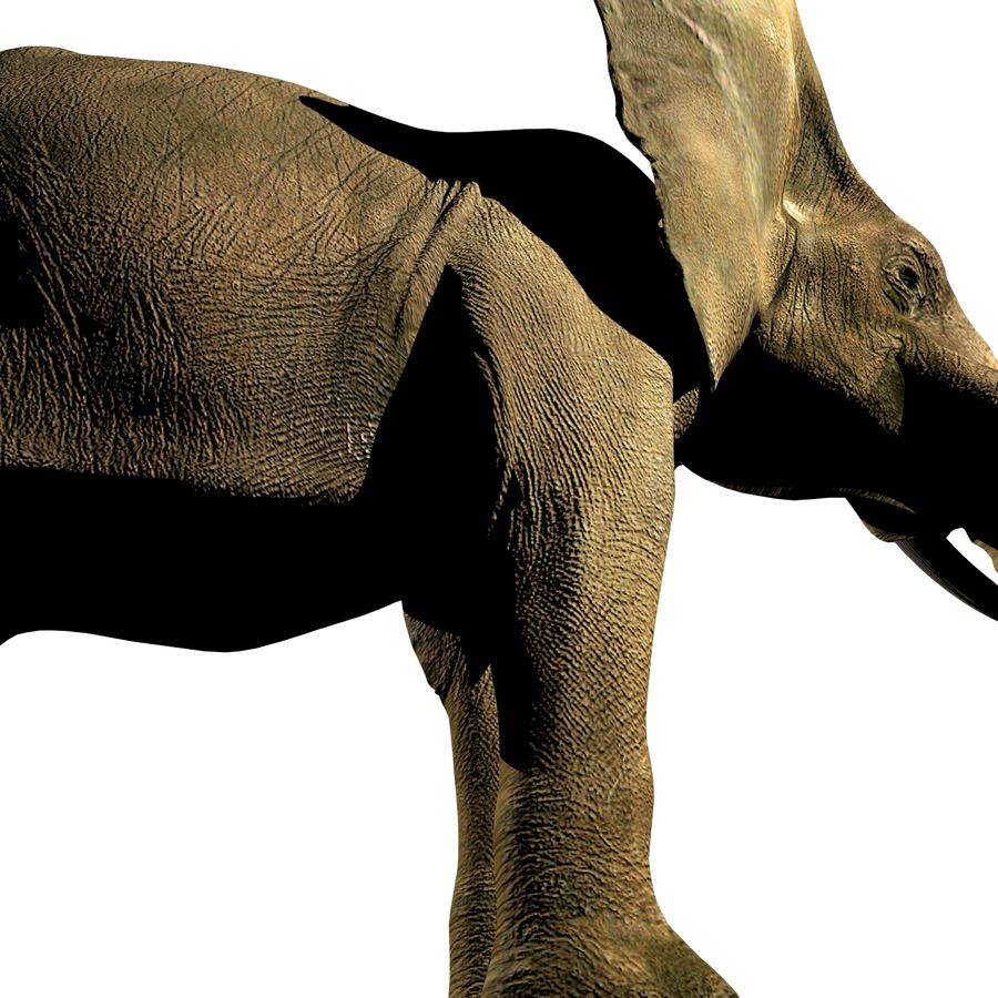 Elefante (africano) royalty-free 3d model - Preview no. 4
