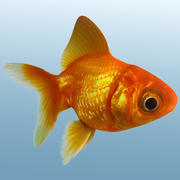 Gouden vis 3d model