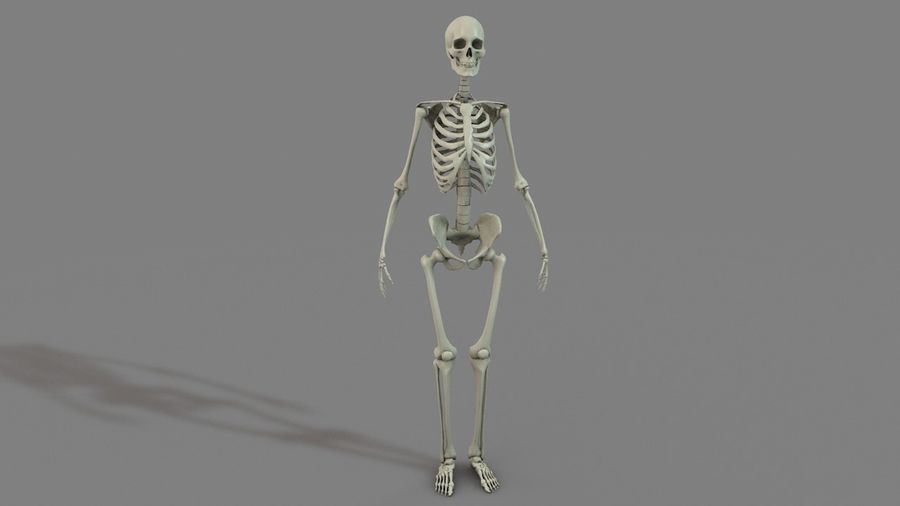SKELETON 하이 폴리 royalty-free 3d model - Preview no. 3