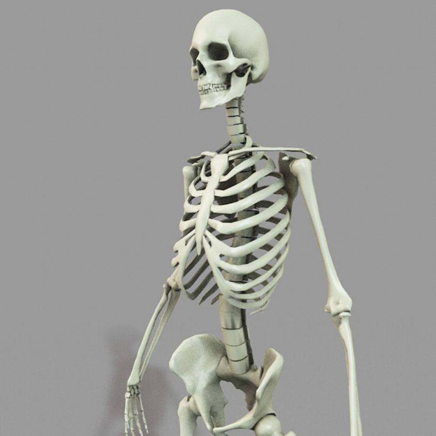 SKELETON High Poly royalty-free 3d model - Preview no. 5