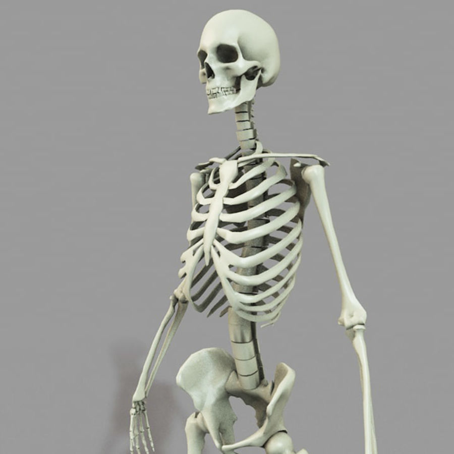 SKELETON 하이 폴리 royalty-free 3d model - Preview no. 5