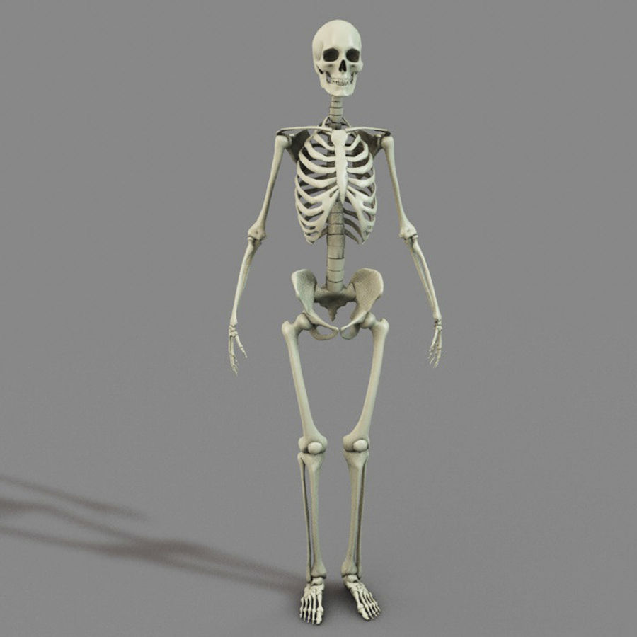SKELETON 하이 폴리 royalty-free 3d model - Preview no. 4