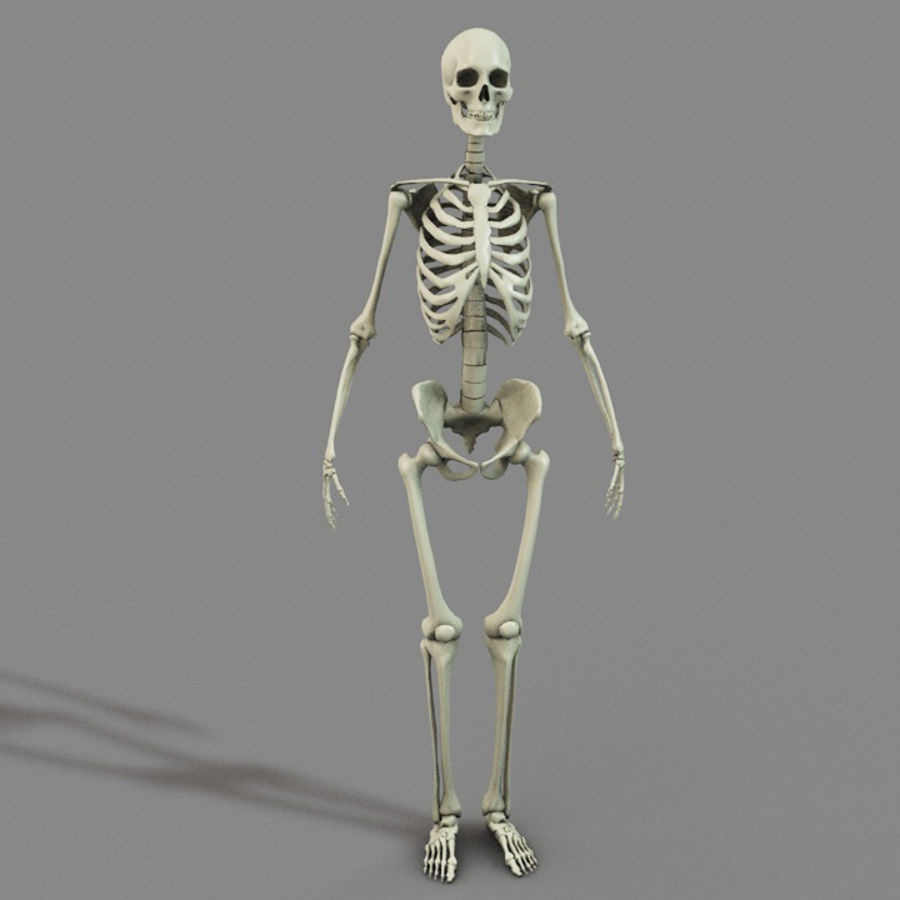 SKELETON High Poly royalty-free 3d model - Preview no. 4