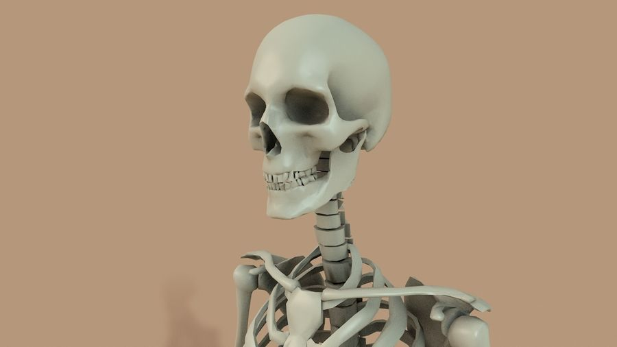 SKELETON High Poly royalty-free 3d model - Preview no. 2