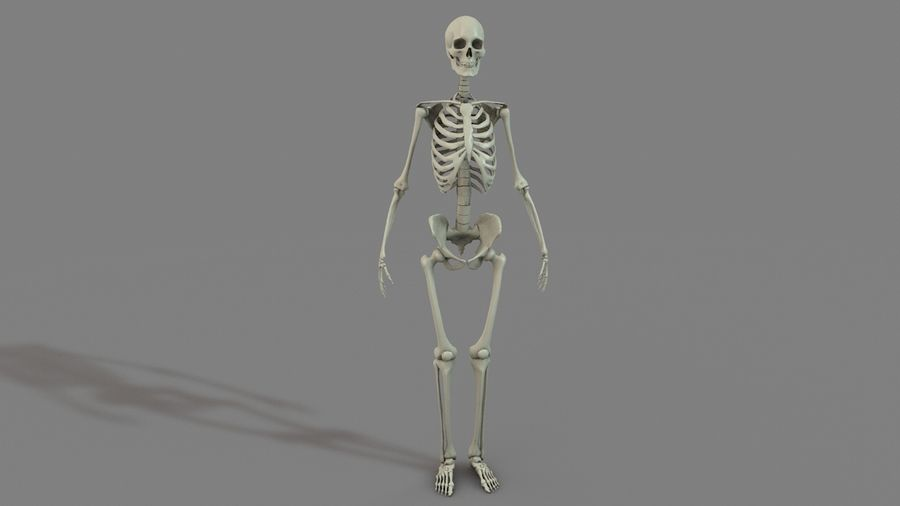 SKELETON High Poly royalty-free 3d model - Preview no. 3