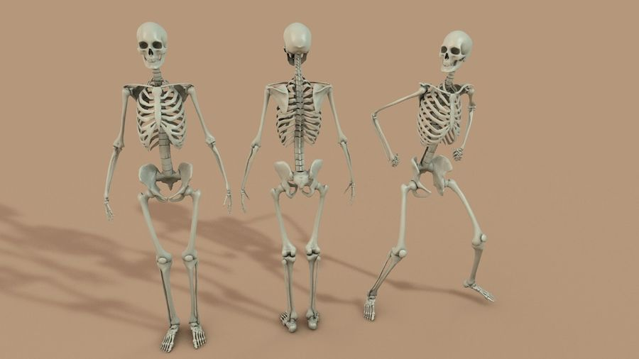 SKELETON 하이 폴리 royalty-free 3d model - Preview no. 1