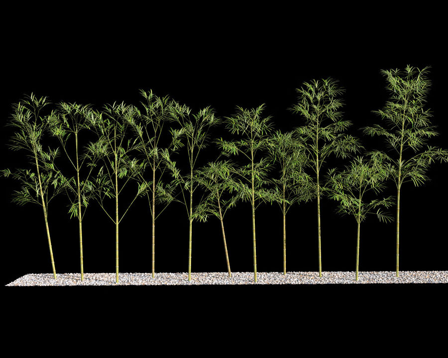 Bamboo Trees 4 (+ GrowFX) royalty-free modelo 3d - Preview no. 5
