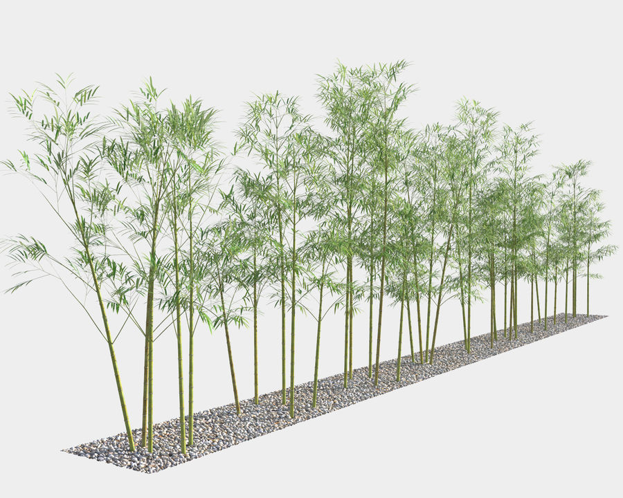 Bamboo Trees 4 (+ GrowFX) royalty-free modelo 3d - Preview no. 2