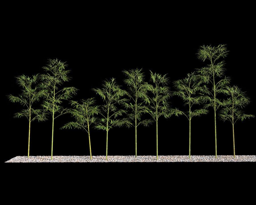 Bambusbäume 4 royalty-free 3d model - Preview no. 8